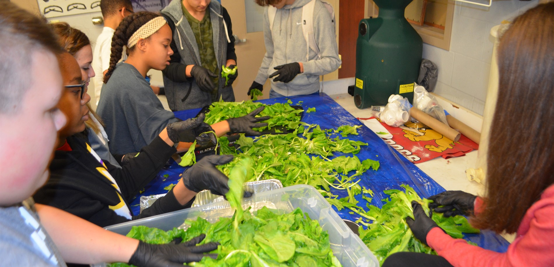 John Hardin Agriculture students are raising bibb lettuce for the school cafeteria and to help relieve community hunger.